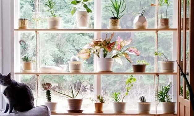 Boldogabb leszel a szobanövényektől, és még a gyerekek is jobban tanulnak