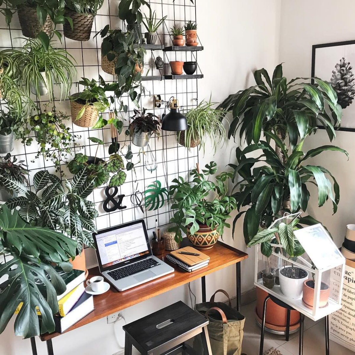 szobanövények, stressz, szorongás, teljesítmény, lakberendezés, levegőtisztító
