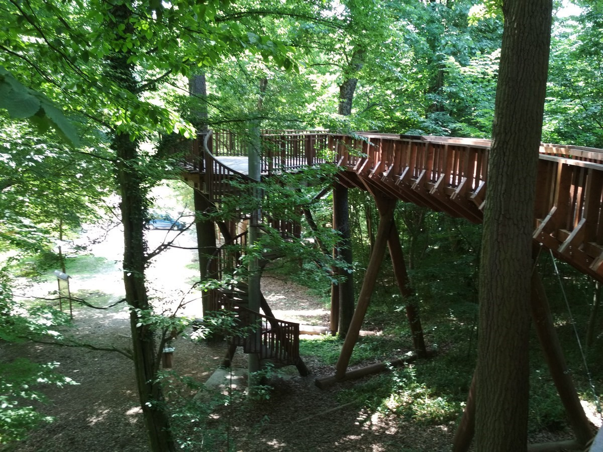 lombkorona ösvény, lombkorona tanösvényekről, kirándulás, túra, családi program, természet
