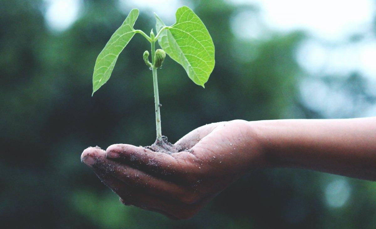 környezettudatos nevelés, tippek, kertészkedés, faültetés, szülői felelősség, környezettudatos