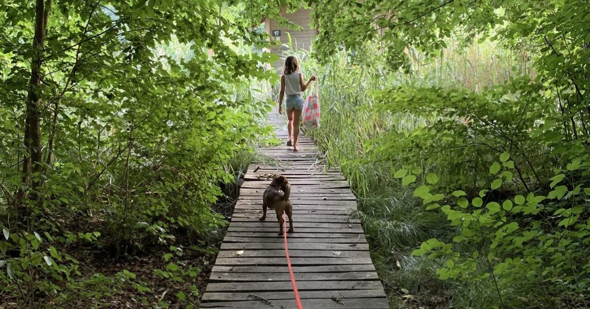 Félelem és reszketés Vas megyében, avagy nyaralás négy gyerekkel, kutyával